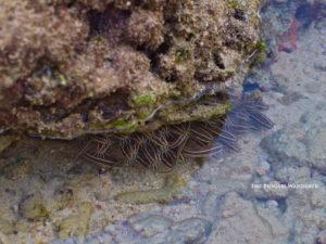 Marine Life in low tide- Havelock (The Punjabi Wanderer)